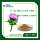 Extracto natural puro de extração de cardo de leite com 80% de leite