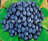 100% natürlicher Heidelbeere-Auszug Anthocyanidins15%-35%