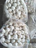 Aglio bianco puro fresco cinese di alta qualità dall'origine di Jinxiang