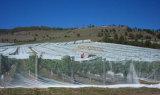 Anti rete dell'ape di protezione UV (ABN050)