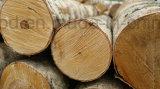 O dobro tomou o partido madeira compensada sadia da melamina da prova para a decoração