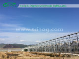 Grondaia Connected Film Greenhouse per Nursery