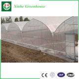 Verdura/serra della Plastica-Pellicola usata frutta da vendere