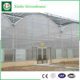 El mejor invernadero usado del túnel de la película plástica para el crecimiento de la lechuga
