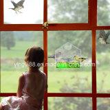 Jaula de pájaro de acrílico de la alta calidad para el Amazonas