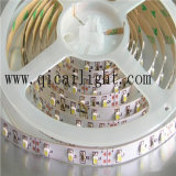 striscia Superbright di 168LEDs/M 2835 LED