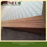 Waterproof Brown Film Faced Plywood for Construction