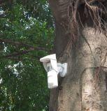 공원 화재 싸움을%s 소리 & 가벼운 경고 발생을%s 가진 옥외 태양 경보 동작 탐지기