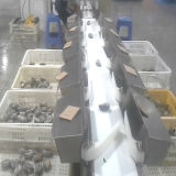 물고기 분류를 위한 자동 점검 무게를 다는 사람