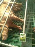 Melhoria do crescimento dos rebanhos animais e das aves domésticas de Unigrow