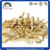 Cordyceps Vigorine Tablet