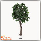 La Chine fournisseur Bonsai artificiel Coffee Tree ou arbre du cacao