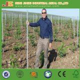 Plantes à raisin Treillis en acier en U en forme durable Emtité de vignoble
