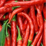 China 2017 el nuevo cultivo seco, fresco y seco Red Hot Chili