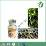 Выдержка Fucus водорослей Fucoxanthin 5%~20% естественная Brown для потери веса