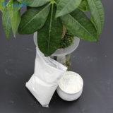 Polvere organica della caramella di Stevia dell'estratto di Stevia