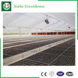 Venlo Typ Glasgewächshaus mit Wasserkultursystem für Gemüse