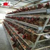 Automatique de la volaille d'oeufs de poulet pour la vente de matériel agricole