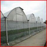 Cubierta plástica del invernadero del palmo multi de la granja de la agricultura para la venta