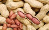 2014 Nova Colheita de sementes de amendoim de pele vermelha