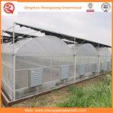 Estufas Growing da flor/fruta/película plástica de vegetais com sistema do pára-sol
