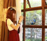 Alimentador redondo de acrílico claro de encargo del pájaro de la ventana