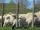 Sailin sechseckiger Huhn-Draht für Bauernhof