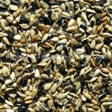 Fornitore del vaglio di colore dei noccioli del seme di girasole