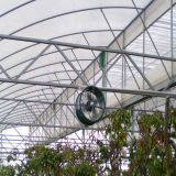 Casa verde de la película plástica