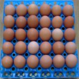 Пластичное Egg Tray Machine 250ton