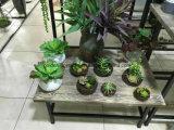 Piante e fiori artificiali della pianta succulente Gu-Jys-00039