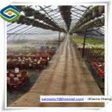 Estufa de vidro do frame pré-fabricado do baixo custo de China com sistemas hidropónicos
