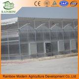 Verwendetes Aluminiumlegierung-Rahmen-Polycarbonat-Handelsgewächshaus