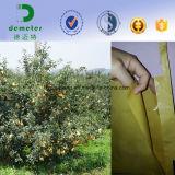 과일 사용과 생물 분해성 특징 포도 보호는 서류상 덮음 부대를 증가한다