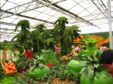 عظيمة زراعة بوليثين تشبيك شبك مع 100% [هدب] جديدة