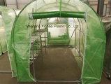 PE 메시 레노 덮개를 가진 소형 정원 온실