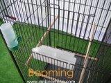SpitzenverkaufenDIY Kettenlink-galvanisierter Vogel-Rahmen-Großverkauf