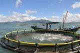 Cage de flottement de pisciculture de cage de pêche de HDPE pour la mer Aquaculature