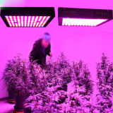 Il sistema idroponico dell'interno 900W LED di IR coltiva l'indicatore luminoso della pianta