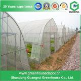 Serre chaude en plastique de bâti en acier d'agriculture pour des légumes