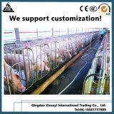 Оцинкованные трубы Farrowing ящиков Pig ограждения завод