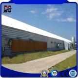 現代鋼鉄構築の鉄骨構造の小屋の養鶏場