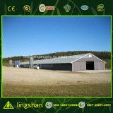 Preiswertes Baumaterial-Entwurfs-Bratrost-Geflügelfarm-Haus