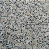 Pietra per lastricati del granito grigio naturale poco costoso da vendere