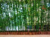 대나무 구 SL5092956의 베스트셀러 인공적인 플랜트