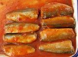 De ingeblikte Vissen van de Makreel in Tomatensaus