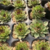 Непосредственно на заводе сочные Искусственные растения воздуха