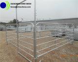 Clôture bon marché galvanisée Chaud-Plongée de cheval