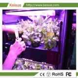 Keisue растений растущих вертикальной фермы со светодиодной лампы по мере роста