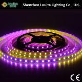 Magischer Traumfarbe 5V schwarzer flexibler LED Streifen 2812 Schaltkarte-RGB programmiert